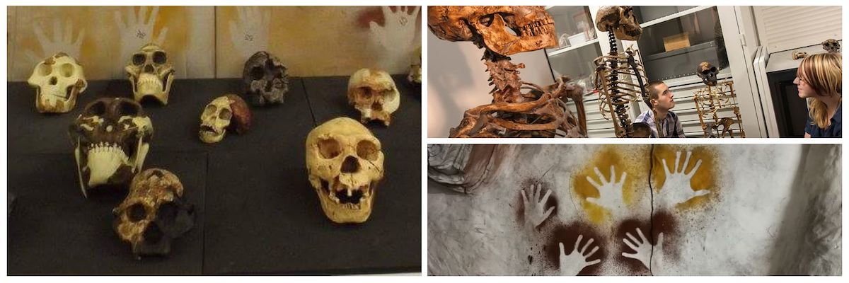 Human skulls, handprints and skeletons