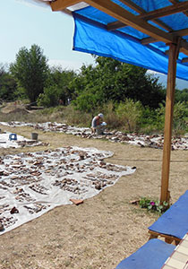 documenting faunal and ceramic finds, Pistiros, Bulgaria (2013)