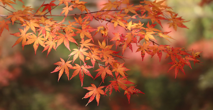 Branch with Red Tree Leaves