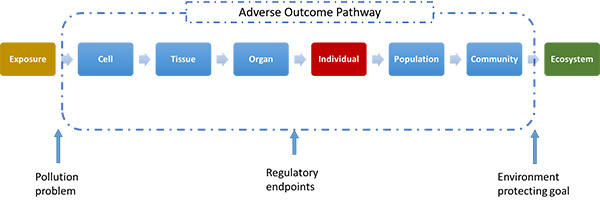 Adverse outcome pathway