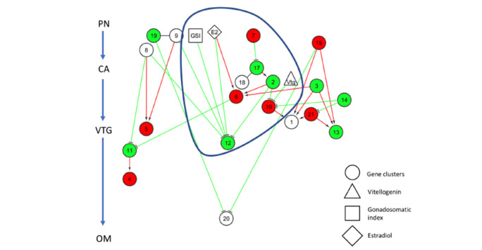 Network modelling example