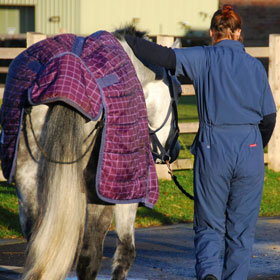 Horse and Veterinary student