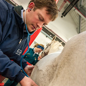 a horse is examined by a vet at the equine hospital