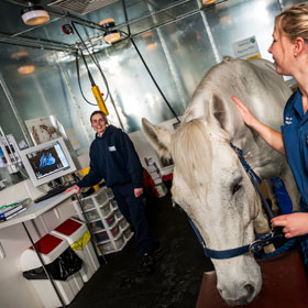magnetic resonance imaging of a horse at the equine hospital