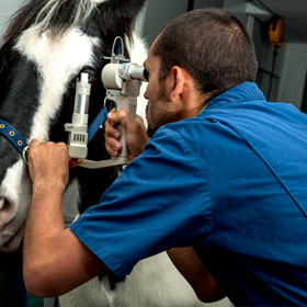 A vet examines a horses eye