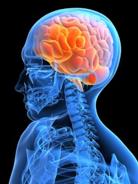 Image result for Neuropharmacology.