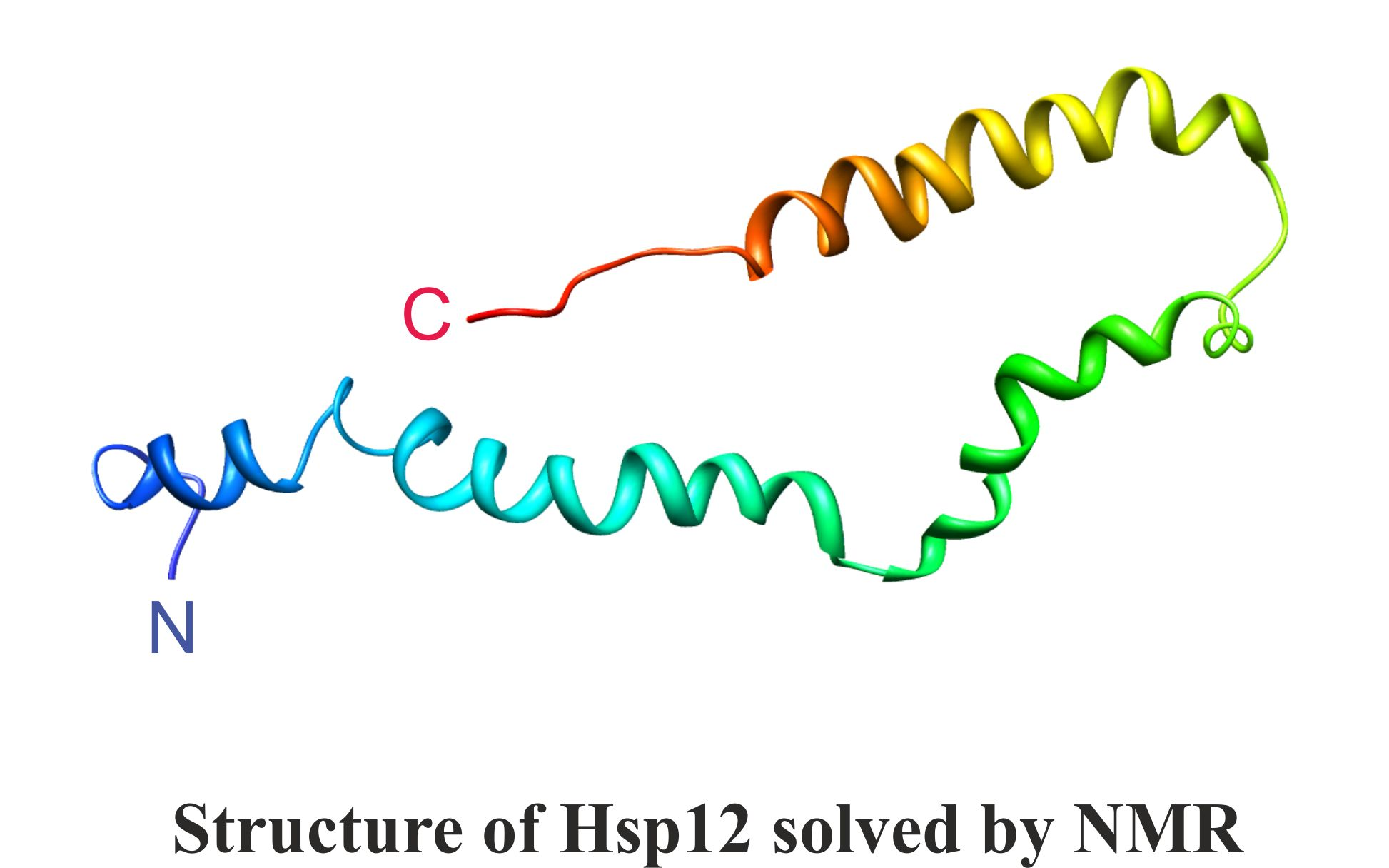 Structure of Hsp12 solved by NMR