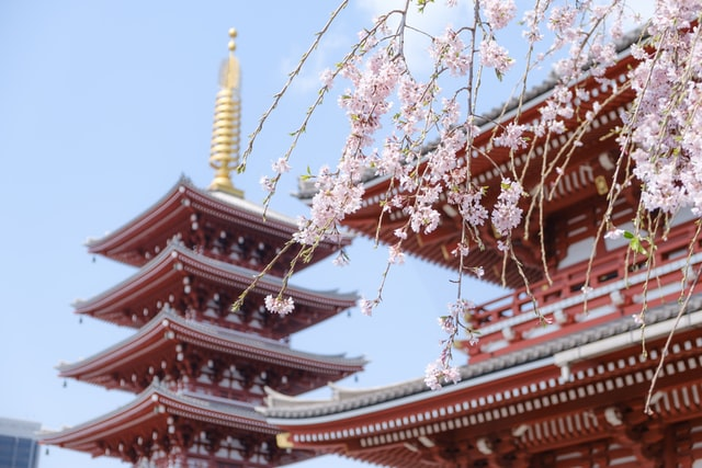 red traditional chinese temple with cherry blossom against a blue sky