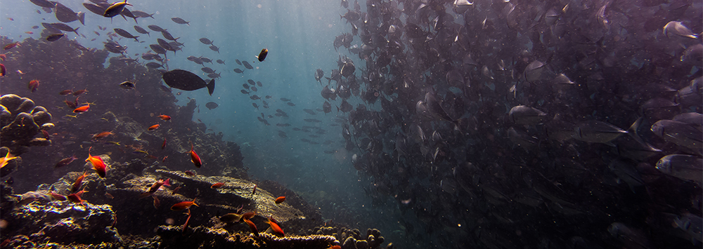 Shoal of fish off Sipadan Island, Malaysia | Image by Johnny Chen |  https://unsplash.com/collections/461104/under-the-sea?photo=bLEmFvSPLog