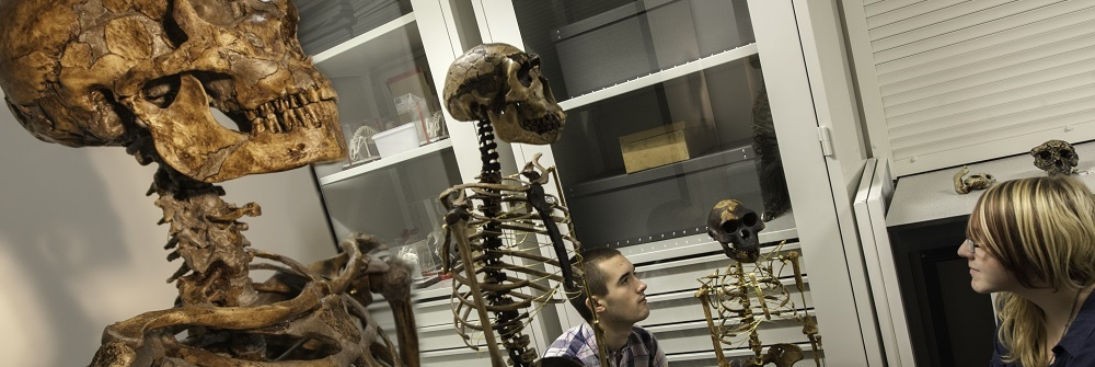 Paleoanthropology MRes study page banner image