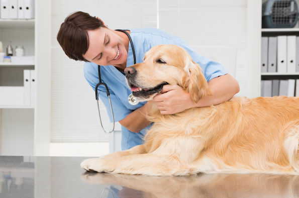 Picture of a vet with a golden Labrador in a veterinary clinic room
