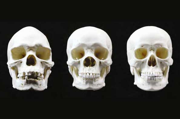 Aboriginal Australian cranial shape variability - University of Liverpool